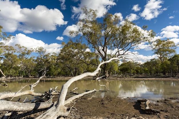 Cenário de um campo repleto de diferentes tipos de plantas e árvores refletindo no lago