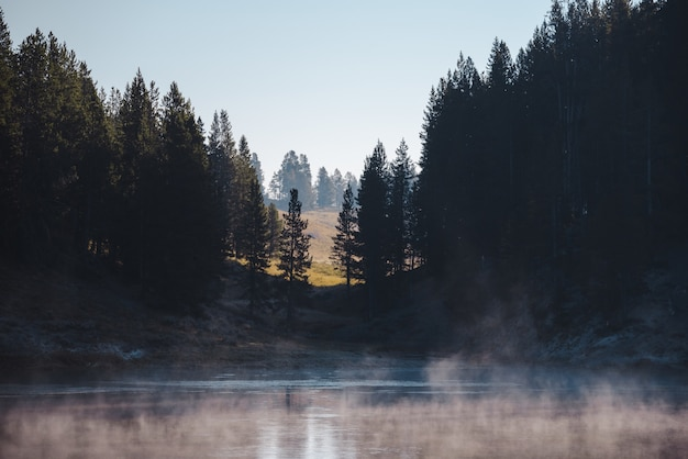 Cenário de um lago congelado cercado por uma floresta