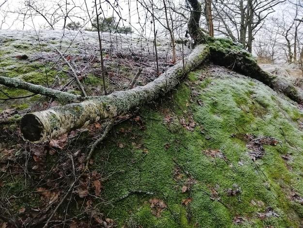 Cenário de uma floresta verde em larvik, noruega