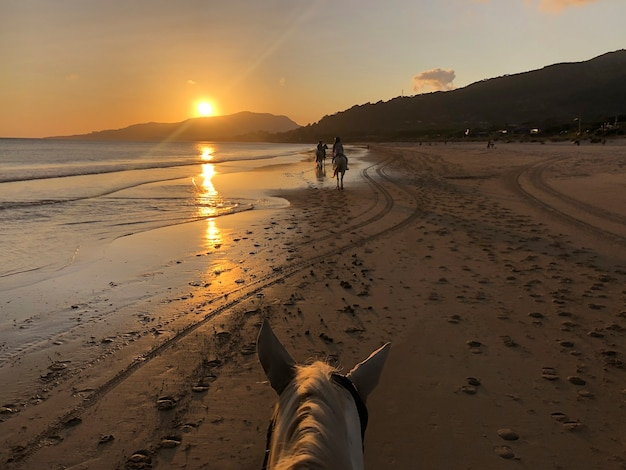 Cenário do pôr do sol na praia andando a cavalo