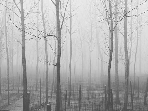 Cenário misterioso com muitas árvores sem folhas envoltas em névoa ao anoitecer