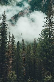 Cenário nevoento sombrio com montanha rochosa atrás de árvores coníferas na nuvem baixa. floresta fantasmagórica atmosférica em denso nevoeiro entre rochas. alpina misteriosa paisagem no início da manhã. hipster, tons vintage