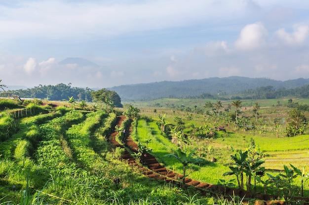 Cenário rural - campos verdes pela manhã