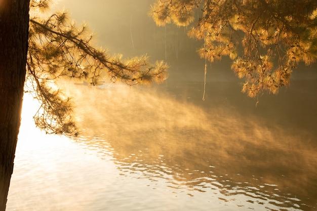 Cenário tranquilo da floresta na manhã - foco seletivo da beira do lago.