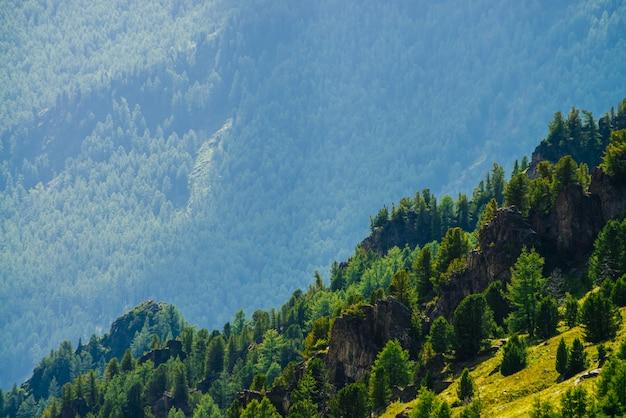 Cenário verde da montanha com a montanha verde vívida com floresta das coníferas e penhascos. árvores coníferas e rochas na grande encosta. paisagem alpina. grandes pedras na encosta íngreme com vegetações ricas