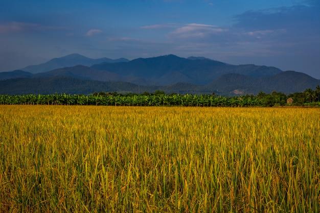 Cenário verde do ricefield e floresta em uma vila.