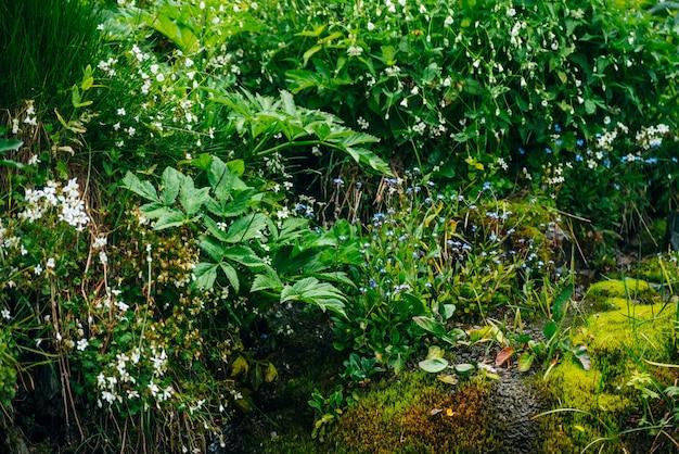Cênica com fluxo de água de nascente transparente entre musgo espesso e vegetação exuberante