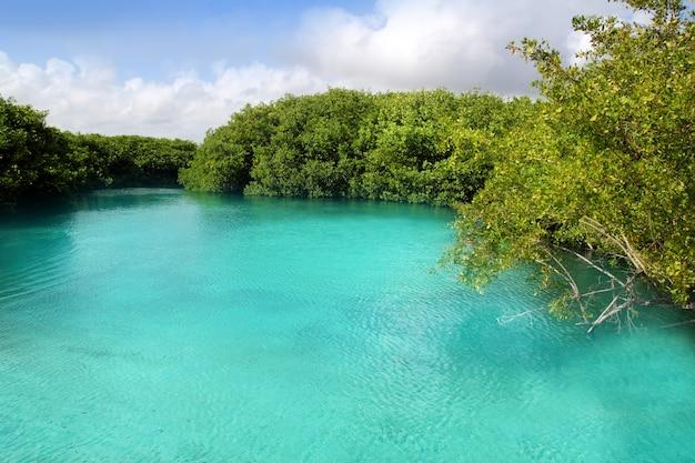 Cenote mangrove turquesa água mayan riviera