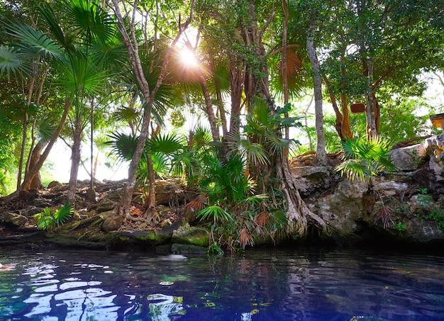 Cenote sumidouro na riviera maya do méxico