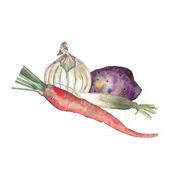 Cenoura, batata, cebola branca, rabanete daikon. ilustração em aquarela.