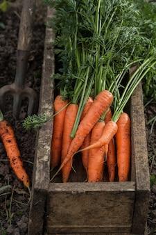 Cenoura fresca em uma caixa velha. colheita de legumes