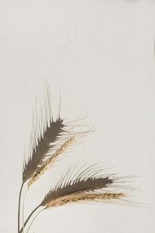 Centeio ou trigo espiga branco. cereais com vista de cima, de disposição plana. conceito mínimo de alimentos orgânicos saudáveis.