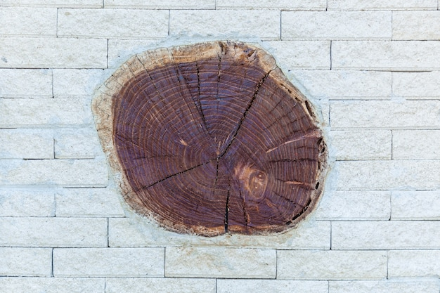 Cerca branca de uma pedra com garrafas de vinho por um barril e corte de árvore