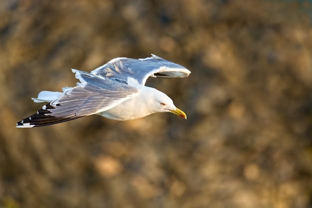 Cerca de gaivota voando entre as colinas