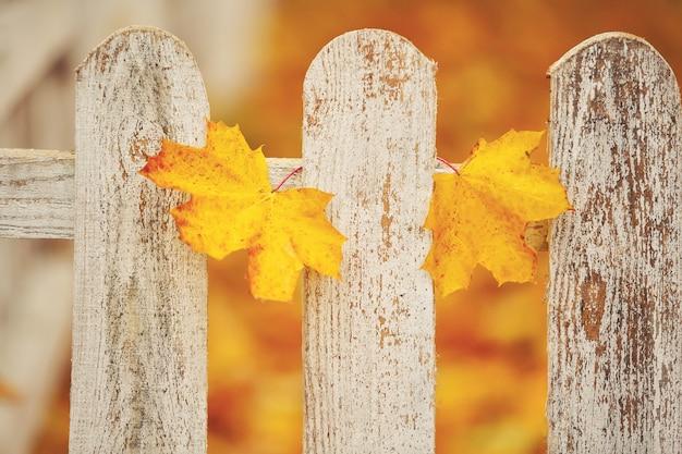Cerca de madeira do close-up branco com as duas folhas amarelas nela. estação do outono