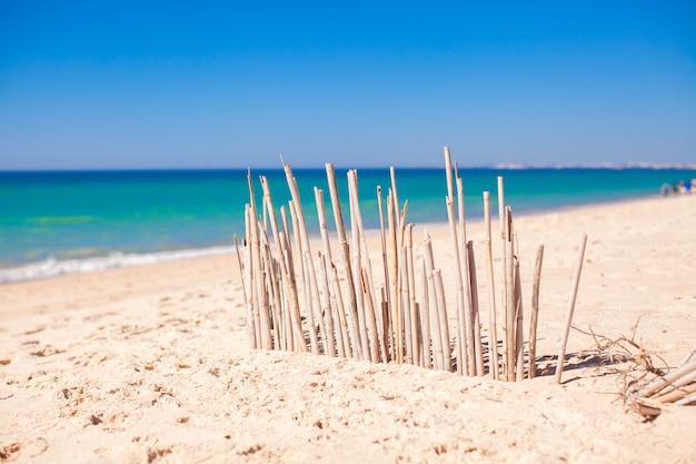 Cerca seca de juncos em uma costa deserta em faro, portugal