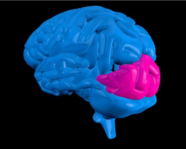 Cérebro azul com lobo occipital destacado