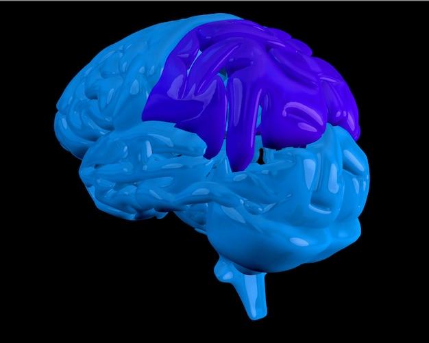 Cérebro azul com lobo parietal destacado