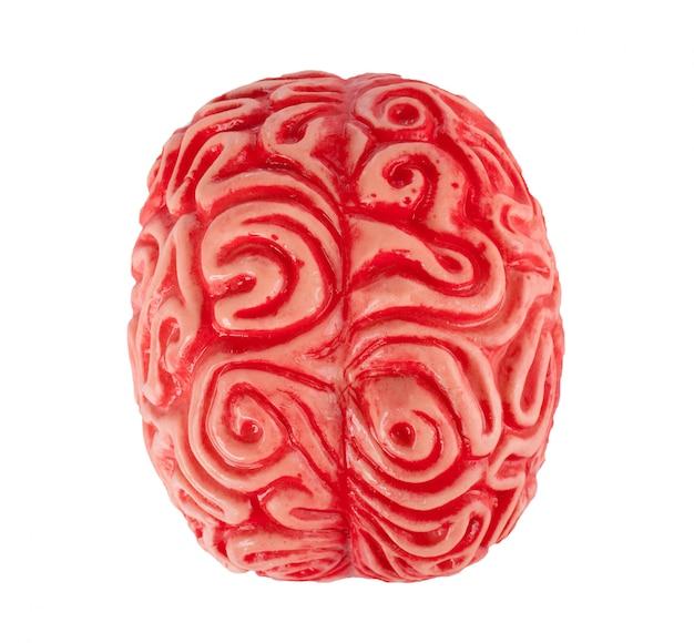 Cérebro de borracha humana