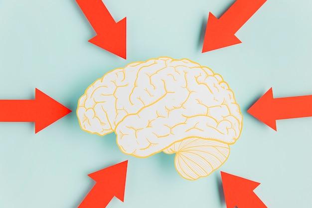 Cérebro de papel com setas