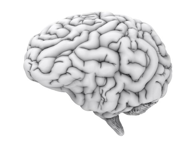 Cérebro humano branco de renderização 3d isolado no branco