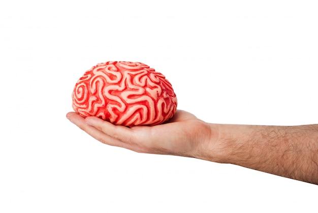 Cérebro humano de borracha em uma mão