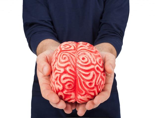 Cérebro humano de borracha entre as mãos