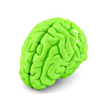 Cérebro humano verde. ilustração 3d. isolado. contém traçado de recorte