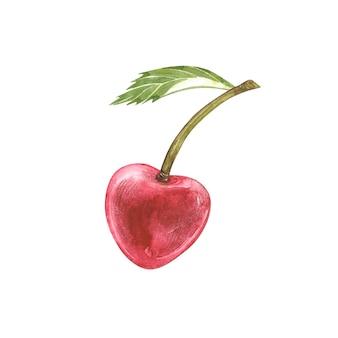 Cereja aquarela desenhada à mão com folha verde