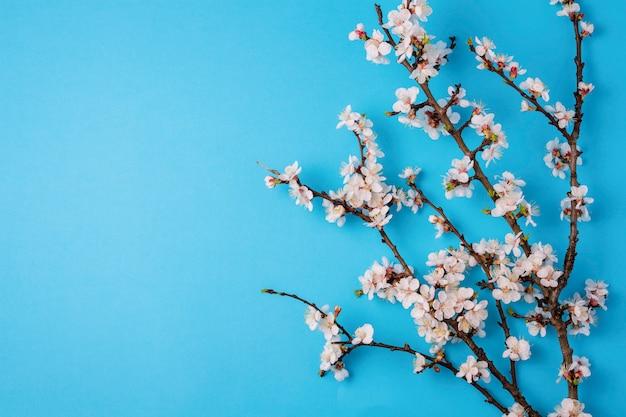 Cereja ramos com flores sobre fundo azul brilhante.
