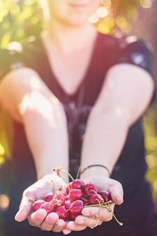 Cereja vermelha madura nas mãos de um punhado