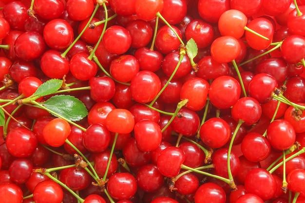 Cerejas frescas maduras em alface como uma superfície