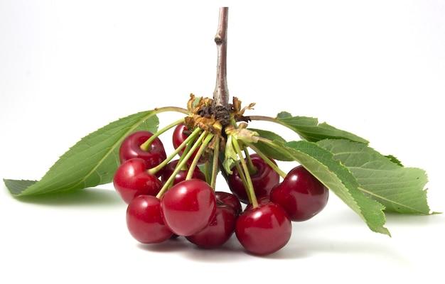 Cerejas vermelhas com folhas isoladas no fundo branco. ramos de frutos maduros Foto Premium