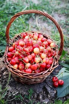Cerejas vermelhas em uma grande cesta de vime