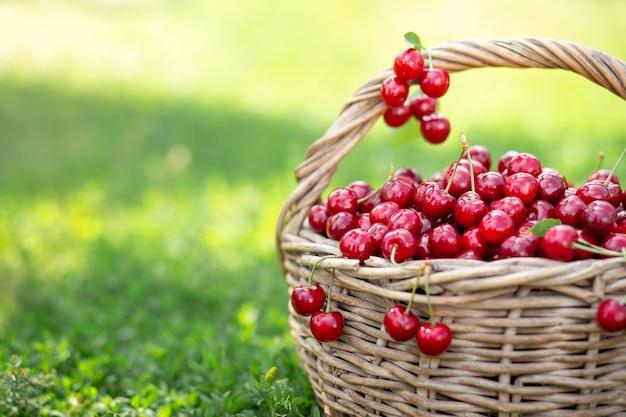 Cerejas vermelhas maduras em uma cesta rústica