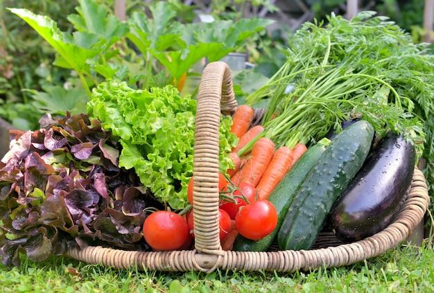Cesta cheia de legumes frescos na frente de um jardim vegatable