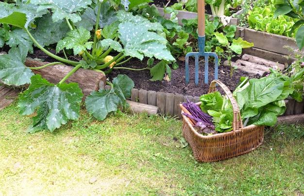 Cesta cheia de vegetais frescos colocados na grama ao lado de hortaliças em um jardim