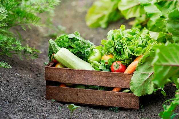 Cesta cheia de vegetais orgânicos de colheita e raiz na fazenda bio orgânica.