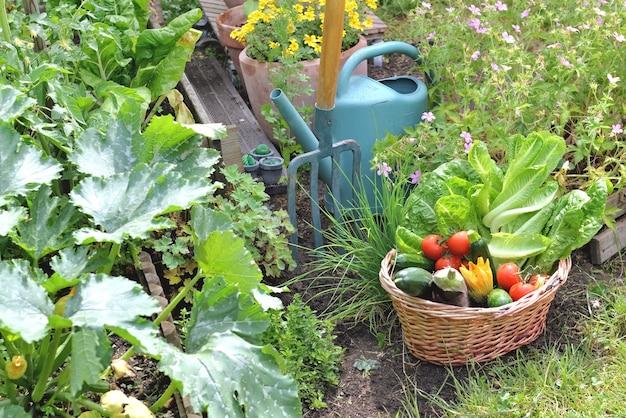 Cesta cheia de vegetais sazonais recém-colhidos no jardim com ferramentas de jardinagem Foto Premium
