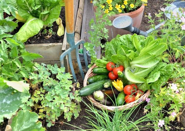 Cesta cheia de vegetais sazonais recém-colhidos no jardim com ferramentas de jardinagem