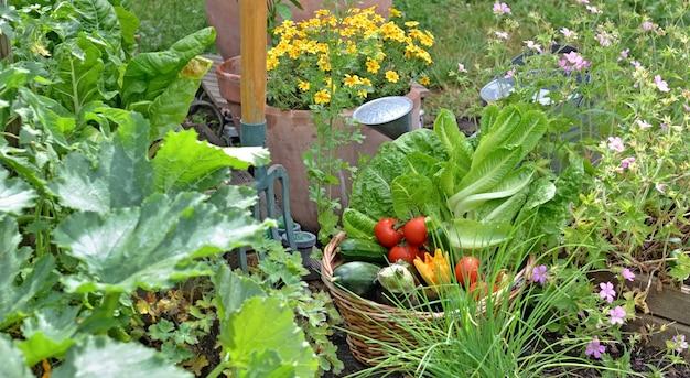 Cesta cheia de vegetais sazonais recém-colhidos no jardim florido com ferramentas de jardinagem