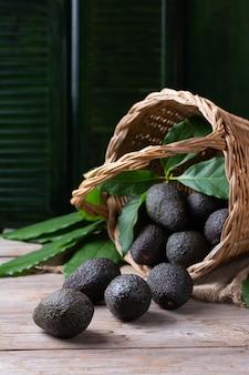 Cesta com abacates orgânicos frescos colhendo colheita