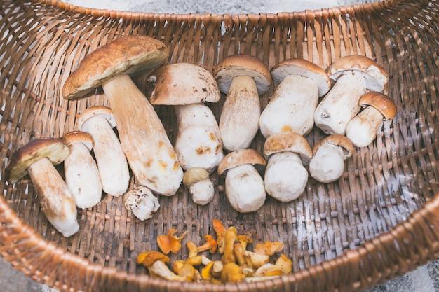 Cesta com cogumelos boletus edulis recém colhidos