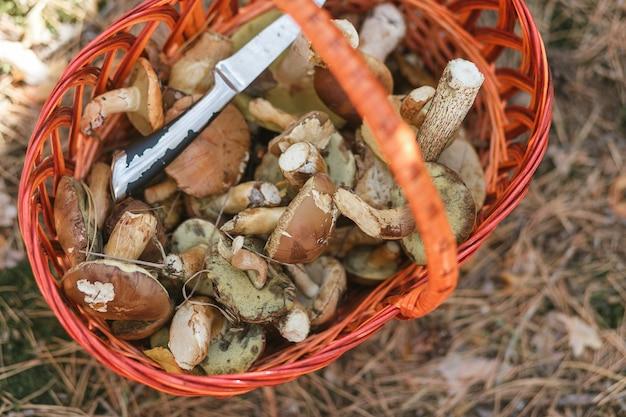 Cesta com cogumelos e uma faca de pé em uma clareira da floresta.