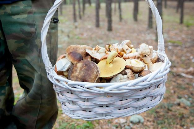 Cesta com cogumelos