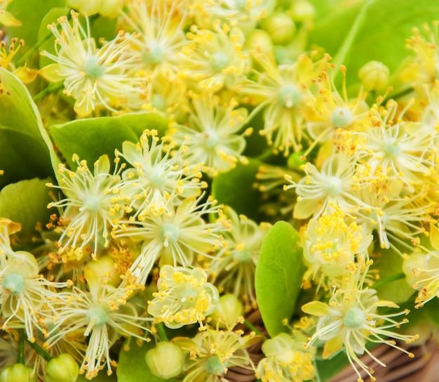Cesta com flores de tília