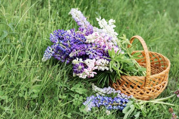 Cesta com flores de tremoço