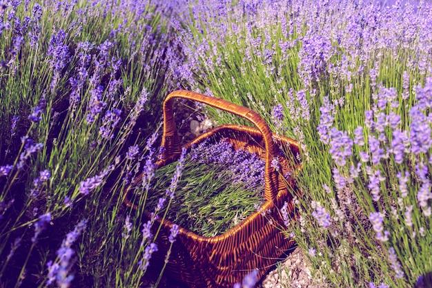 Cesta com lavanda no campo