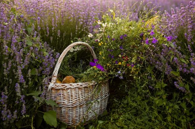 Cesta com pão e flores no campo de lavanda