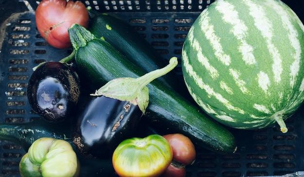 Cesta com verduras e frutas em uma horta